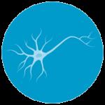 آیکون بخش علوم اعصاب شناختی