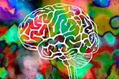 اثرات توهمزا روی مغز