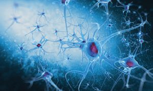 سیستم عصبی مغز